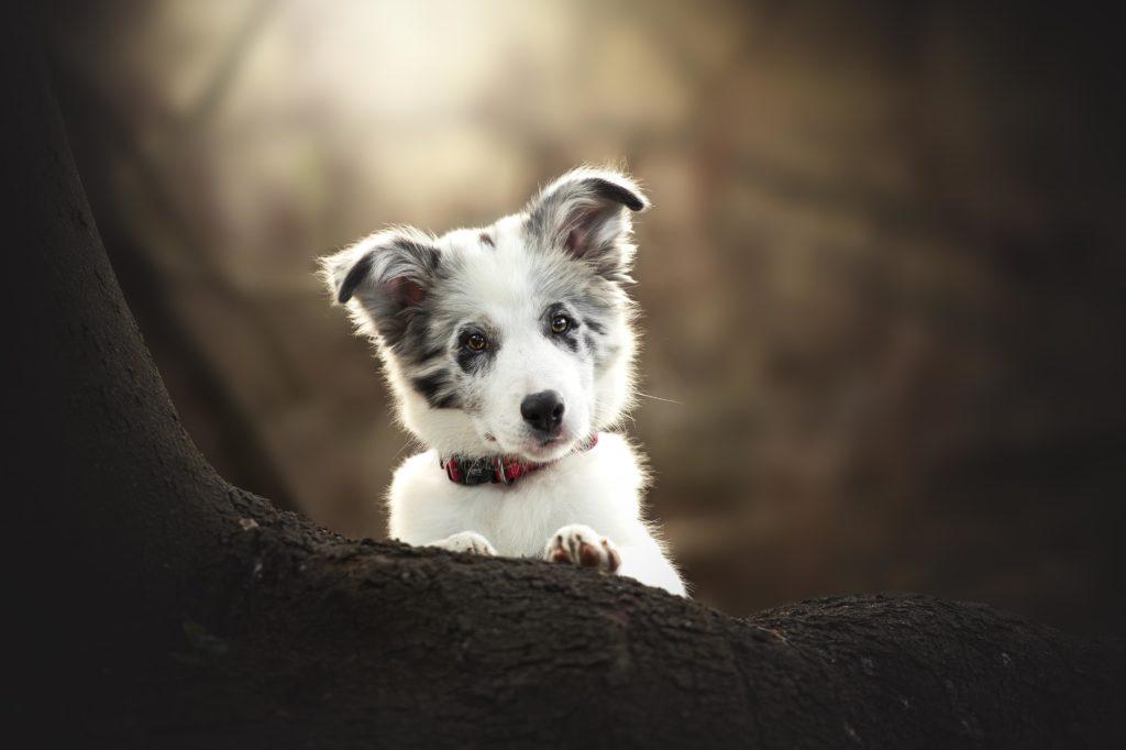 puppy-in-woods-cute.jpg