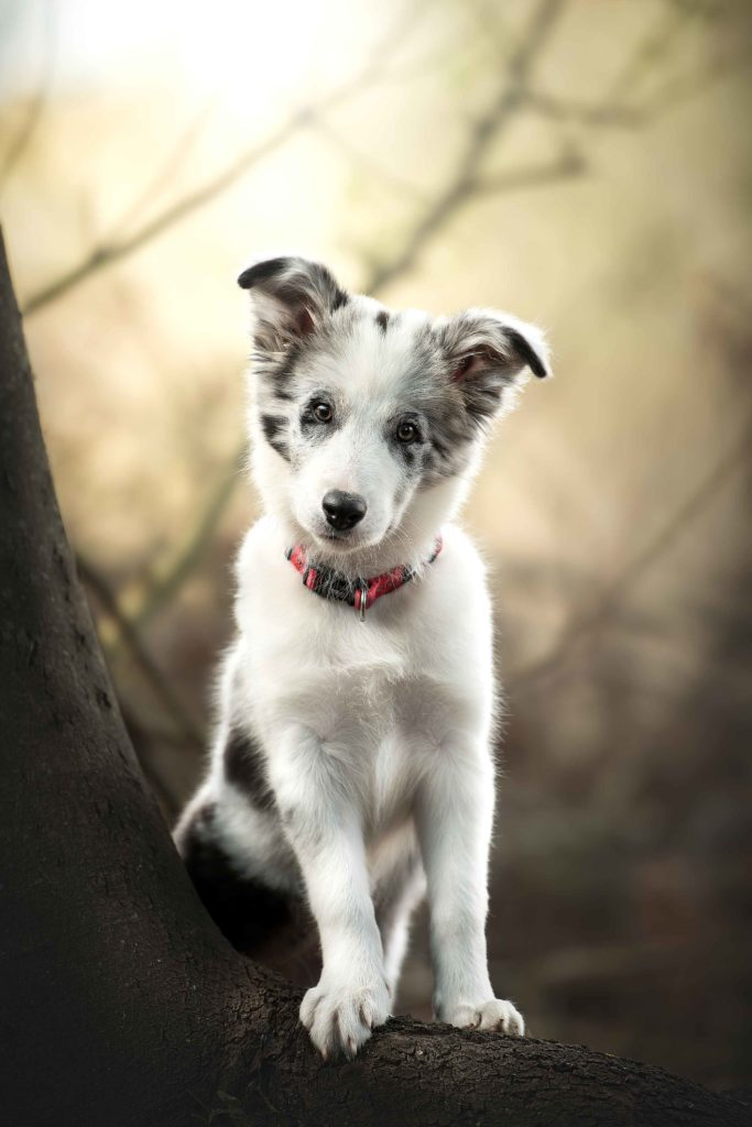 puppy-standing-on-log-cute
